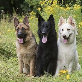 LUOSKO German Shepherd Rescue
