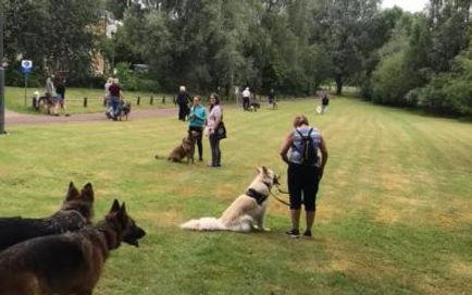 LUOSKO German Shepherd Dog Rescue