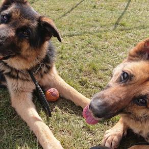 Sasha & Samson back on reserve <3