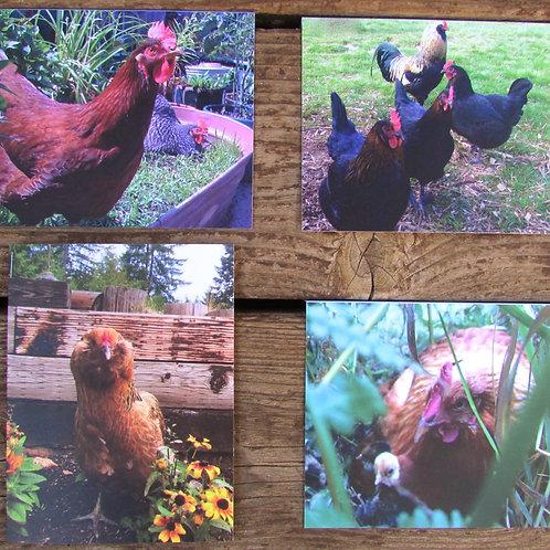 Chicken Notecards
