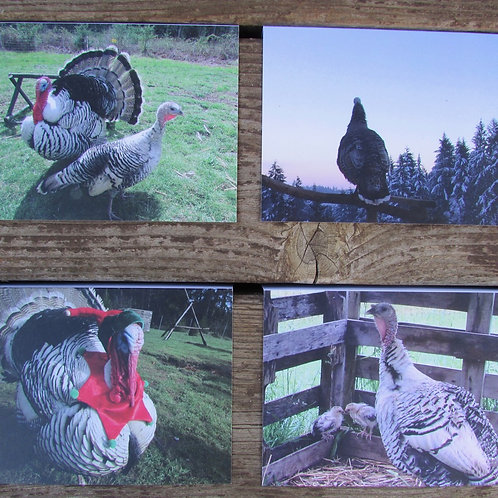 Turkey Notecards