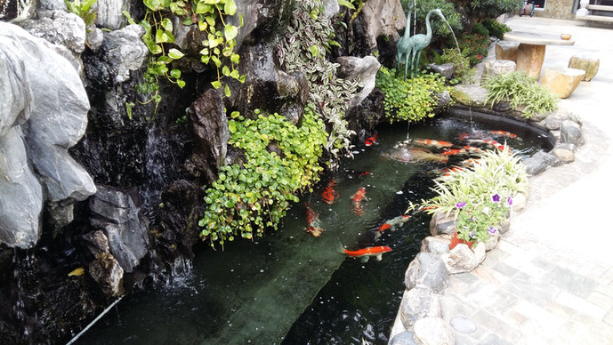 Pond10