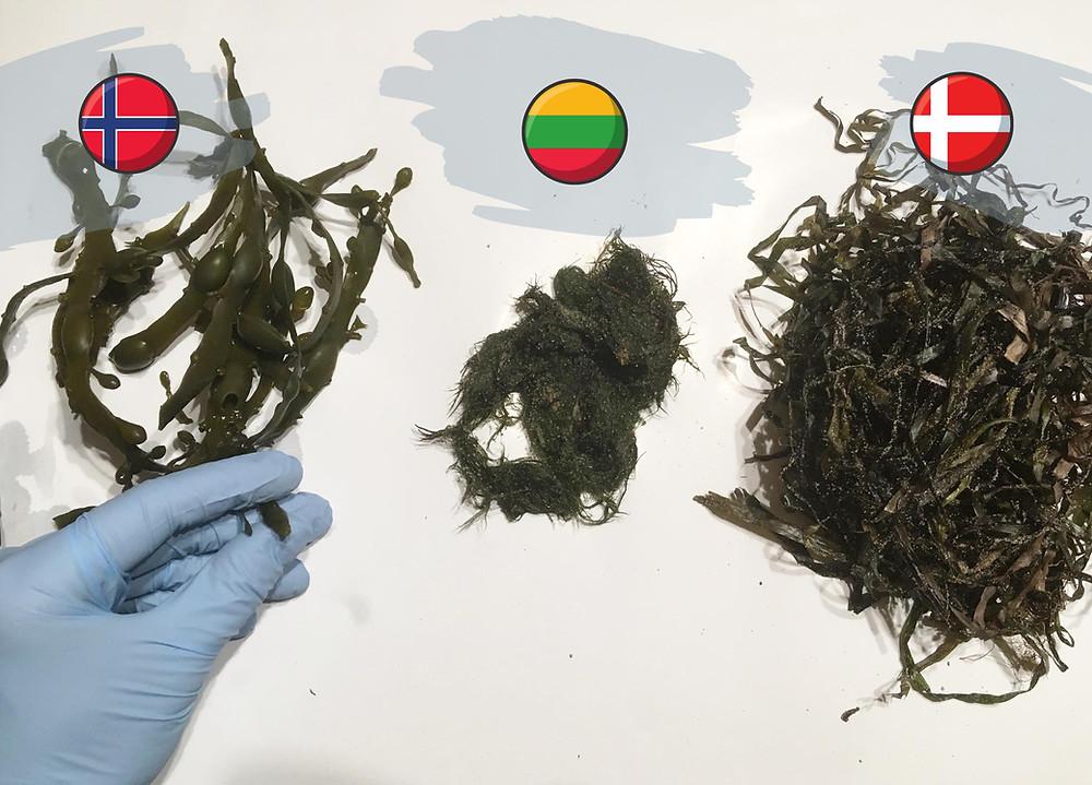 different algae types