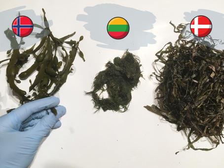 Girls Driven to Use Algae for Environmental Improvement: Algae Hive