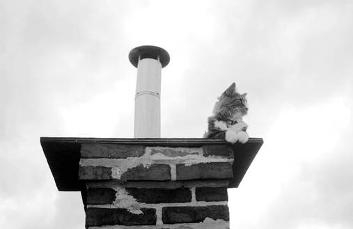 Kitty on the roof again