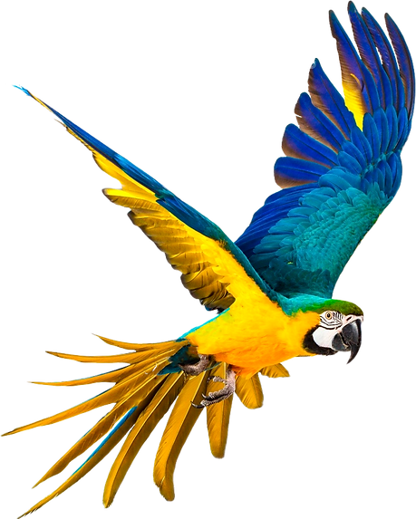 papaguaio.png