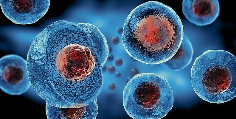 stemcells.jpg