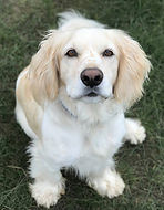 dog only a.jpg
