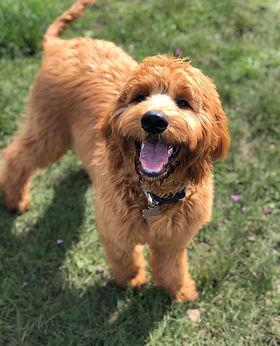 dog only d.jpg