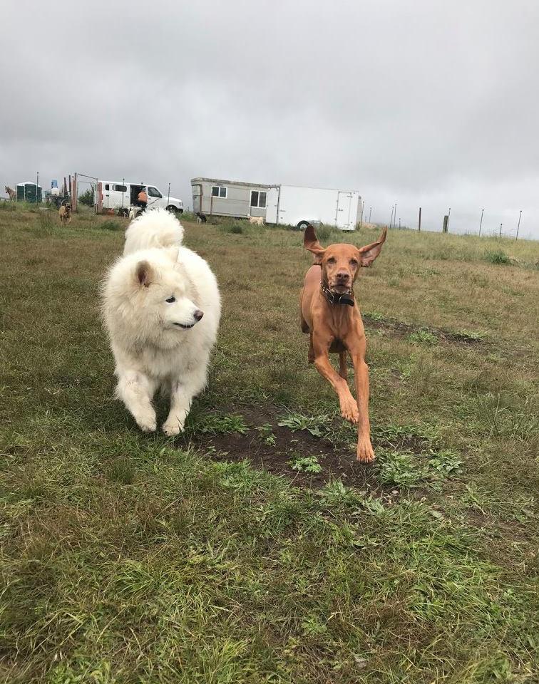 both dogs please.jpg