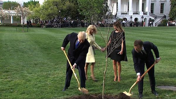 trumps-macrons-plant-french-tree.jpg
