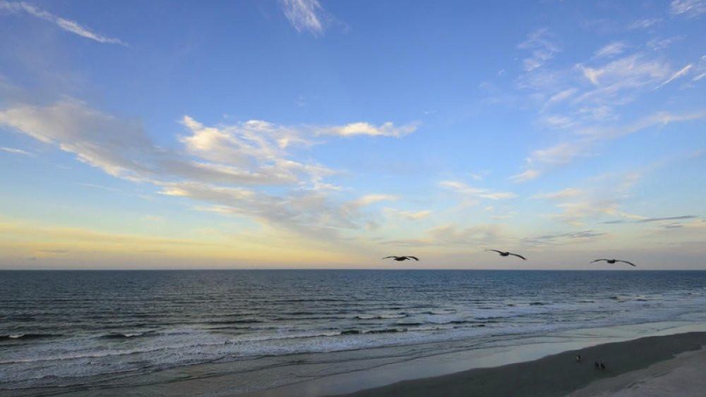Daytona Beach Flamingo Bungalow DeLand