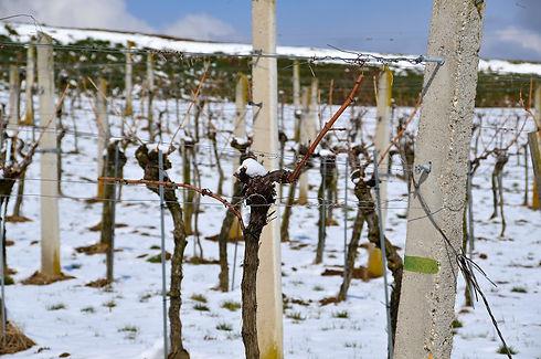 vineyard-6110957_1920.jpg