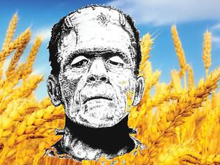 Frankenwheat?