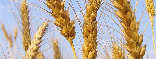 servicios sector agrícola