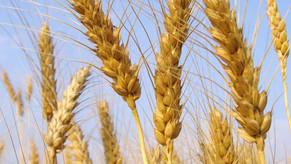 Bio, Assosementi: l'allargamento del 'tempo utile' per la fornitura di sementi biologiche è un'oppor