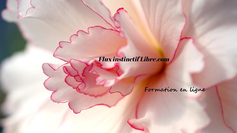 Flux instinctif Libre (1).png