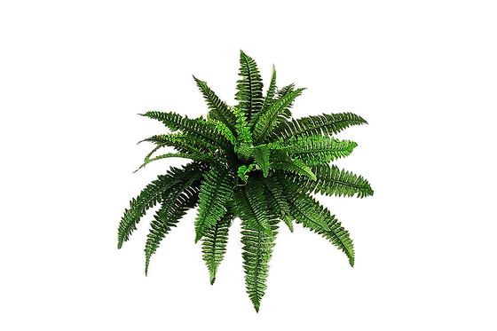 plant-png-hd-plants-png-pic-png-image-90