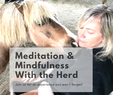 Meditation & Mindfulness With the Herd.p