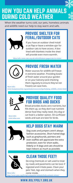 Help animals in cold weather