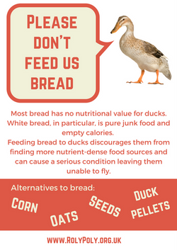 Ducks and bread don't mix!