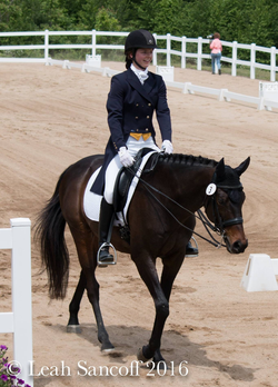 Horse training Windsor