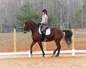 Dressage Riding Chesapeake