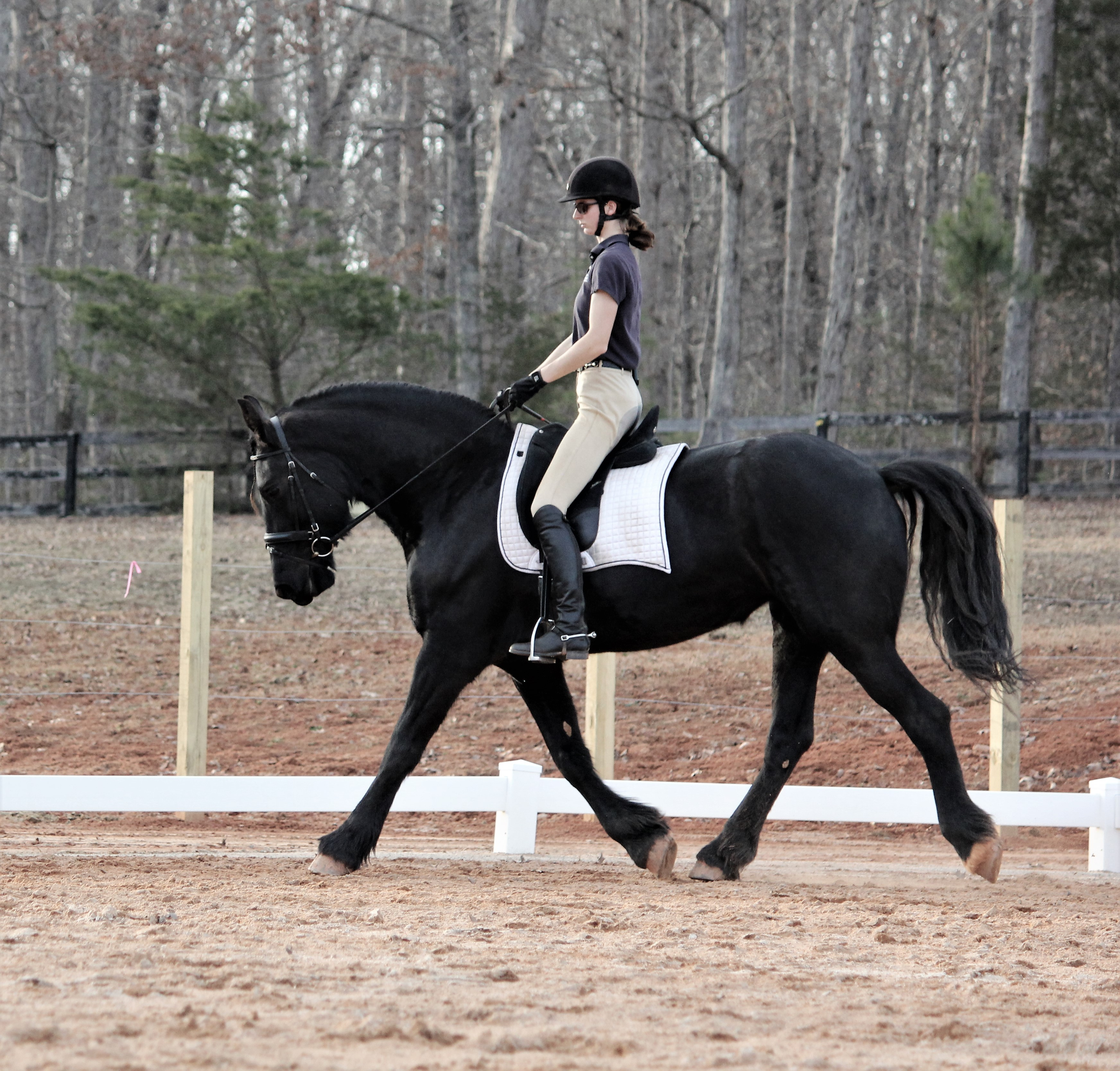 Horseback Riding Hampton Roads