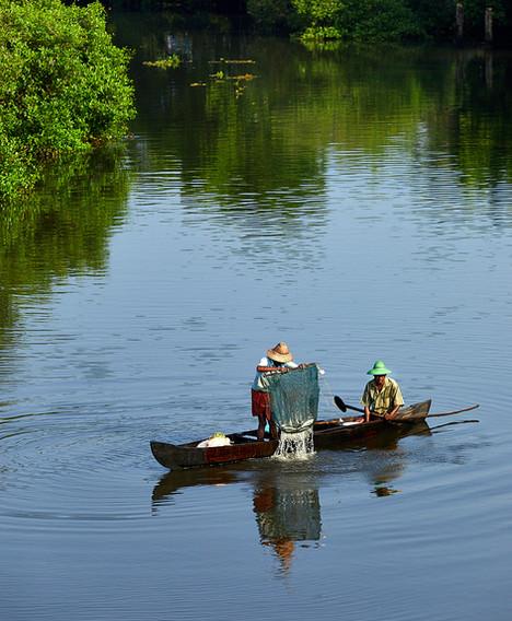 Fisherman at work in backwaters in kerala