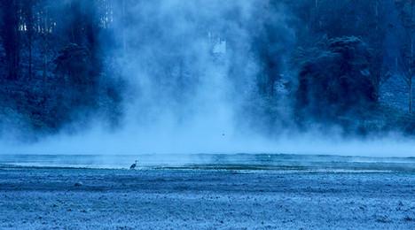 Frozen marsh in the nilgiris
