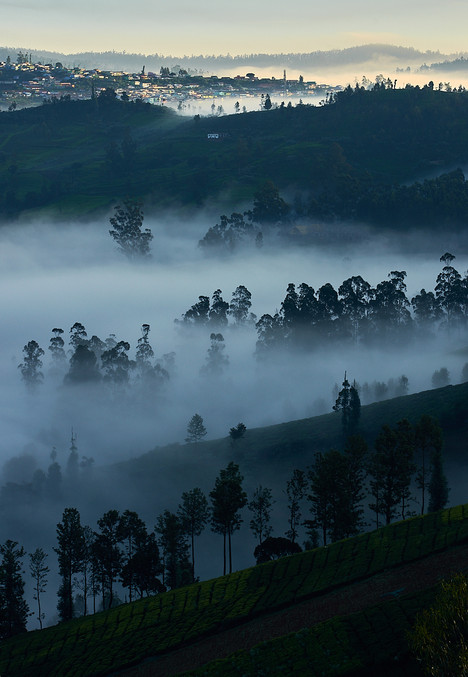 Misty valley in the nilgiris