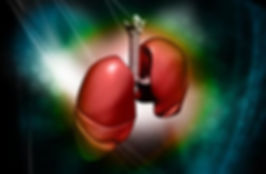 Lungs, Trachea, Bronchi