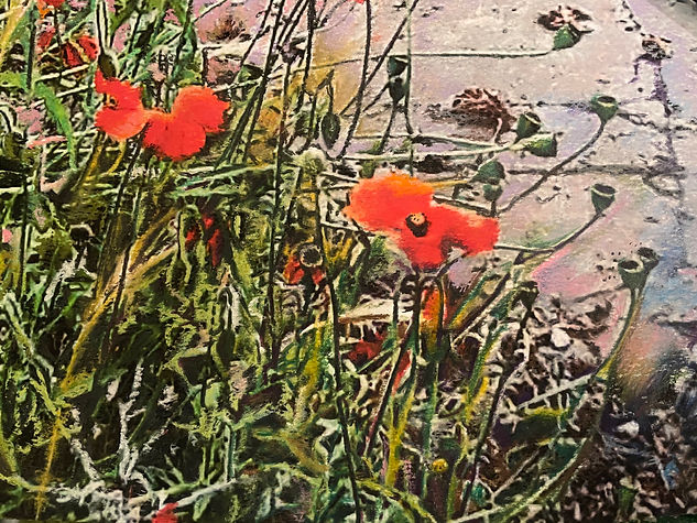 Wild Poppies in the Car Park