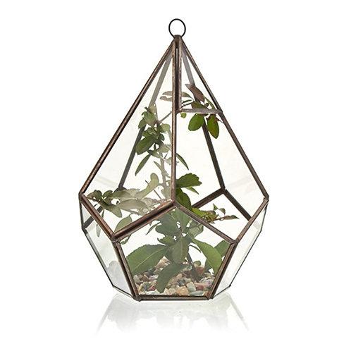 Glass Terrarium - Large Pentagon