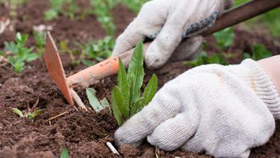 Autumn Weeding The Eco-friendly Way