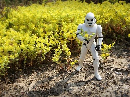 Star Wars Garden Accessories