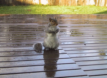 Attracting Squirrels To Your Garden
