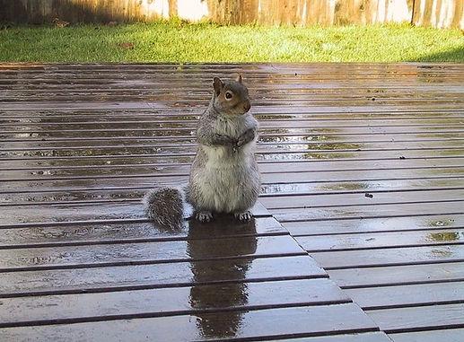 Attracting Squirrels To Your Garden