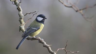 Gardening With Children: Build a Bird Feeder