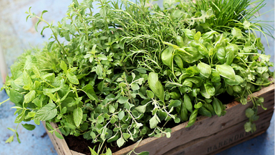 Easy Tips For Growing & Maintaining Your Herb Garden
