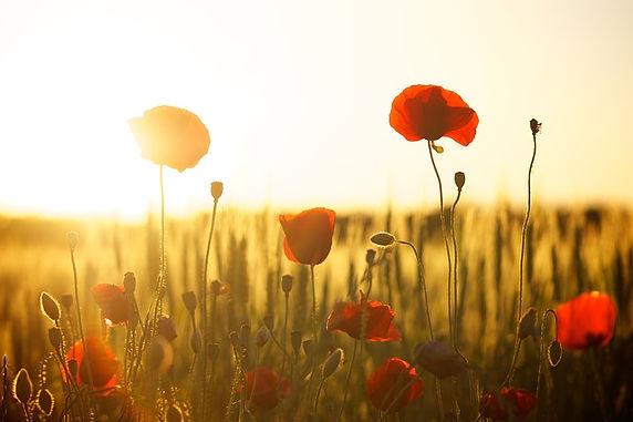 Remembering Heroes: Battlefield Tours