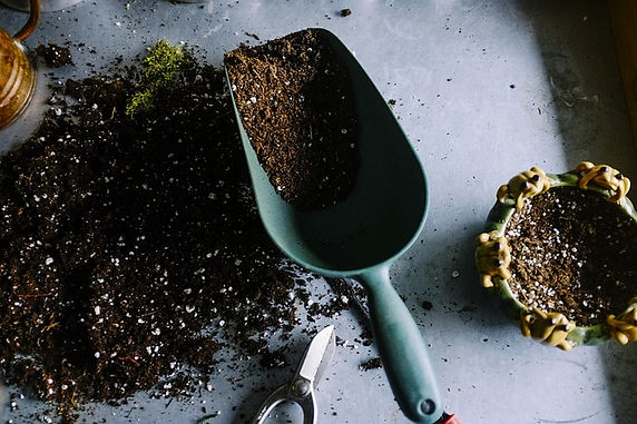 Preparing Your Vegetable Patch For Spring