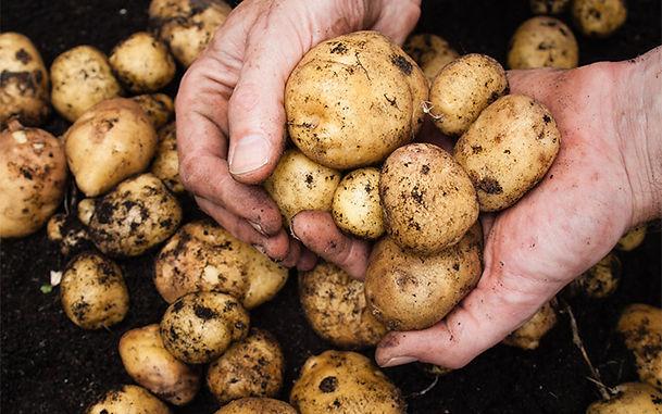 Potatoes: Enjoy A Chiptastic Summer
