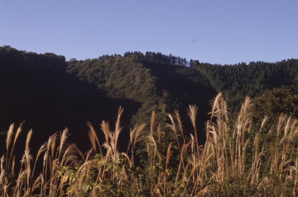 皇学園(ススキと山)
