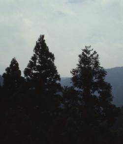 皇学園(森)