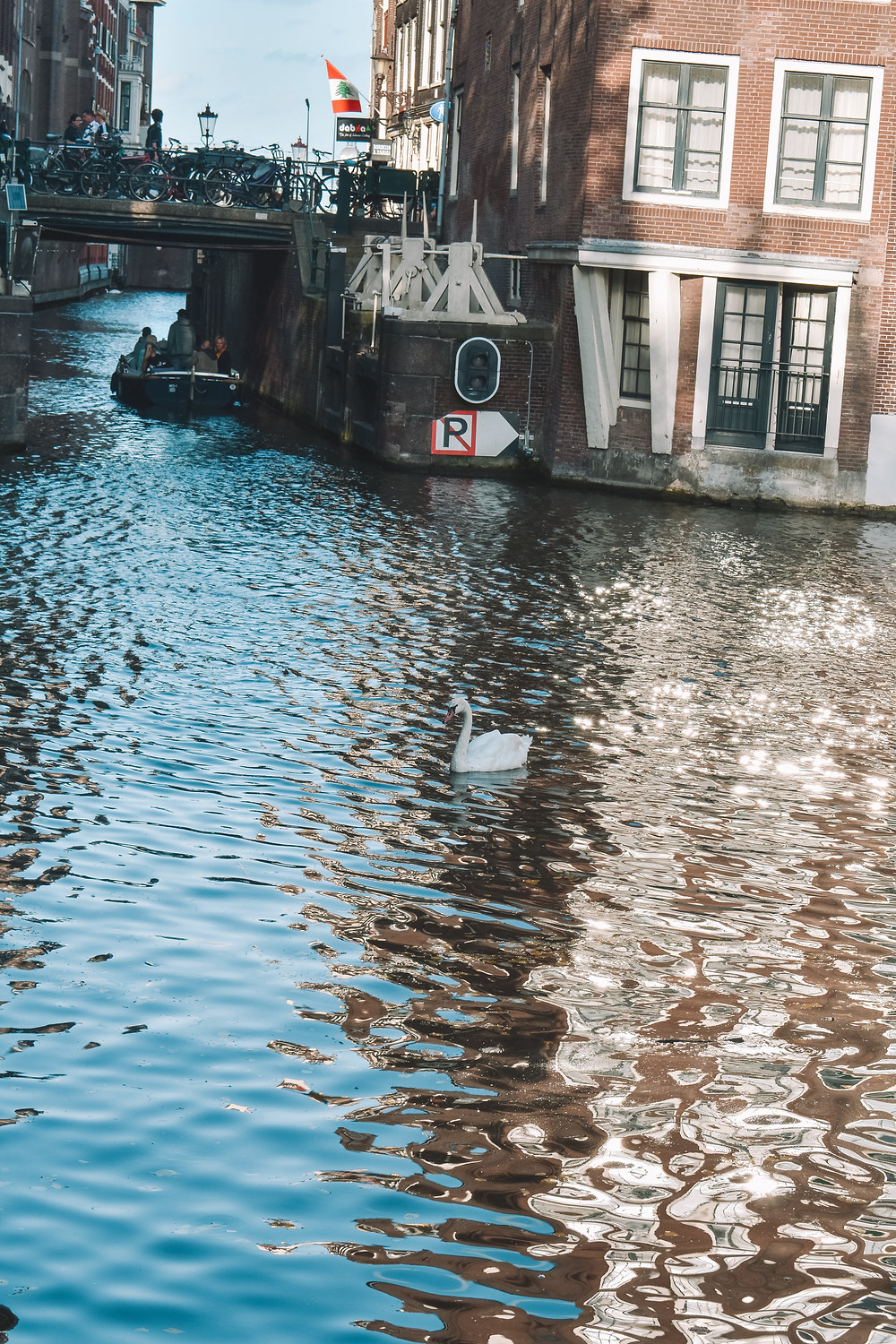 a swan in the canal in Amsterdam