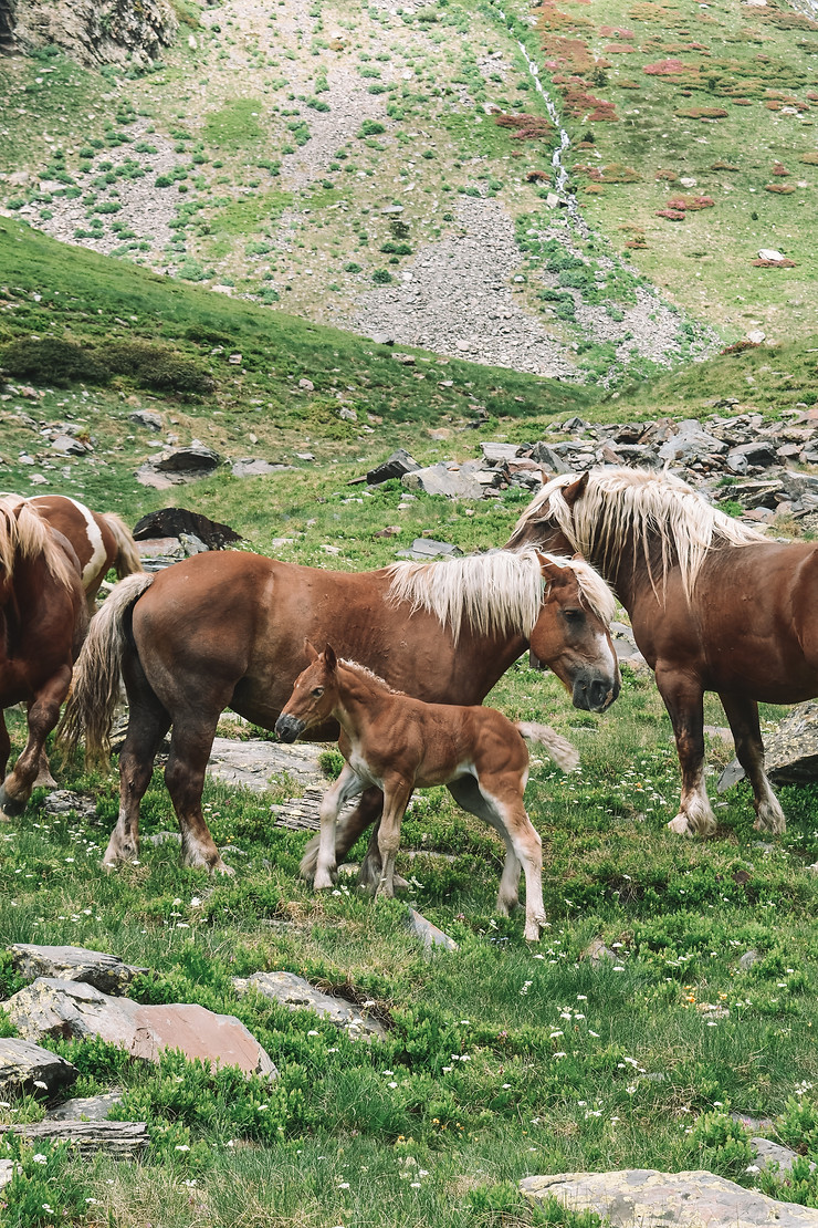 sweet family of horses