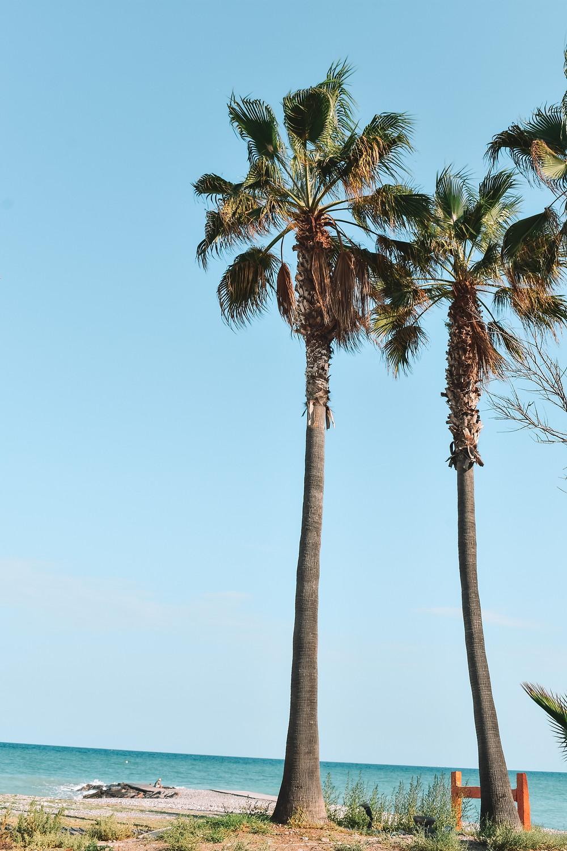 trees along the beach