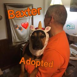 Silly Baxter