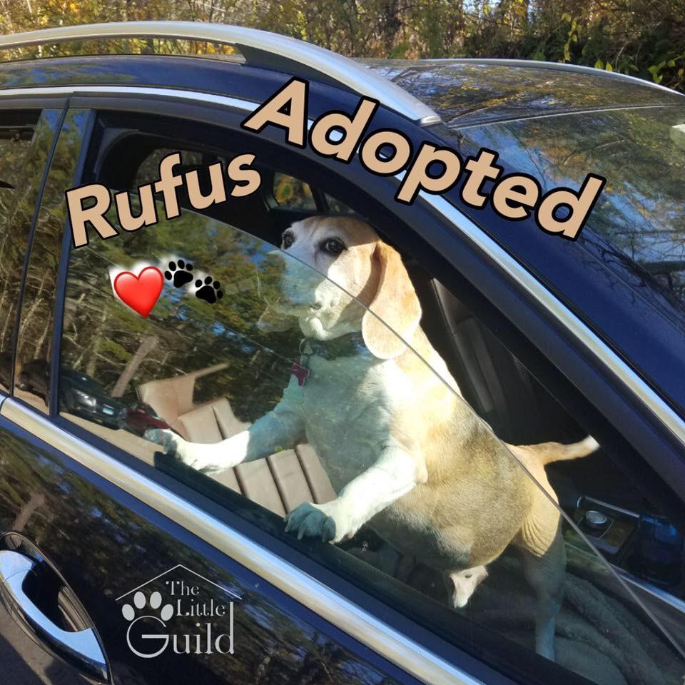 Lucky boy Rufus!
